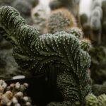 Kaktuszfarm 1