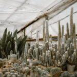 Kaktuszfarm 2