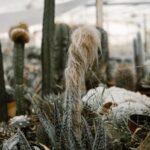 Kaktuszfarm 3