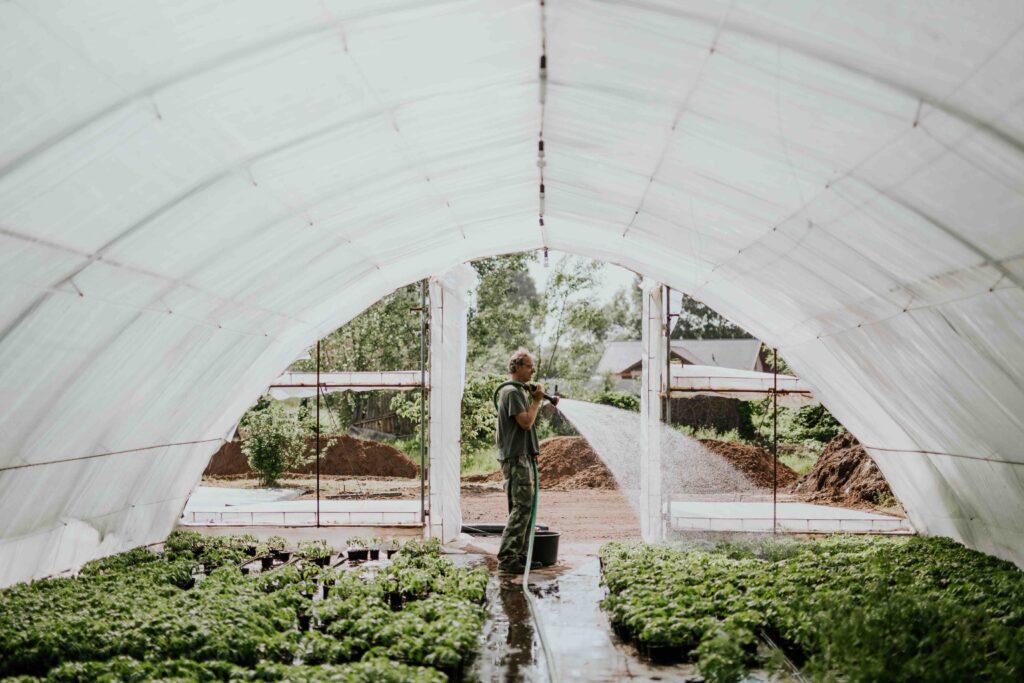 Egyik kedvenc hazai, fűzsernövényeket termesztő kertészünk öntözi a növényeit a dabasi fóliasátra alatt