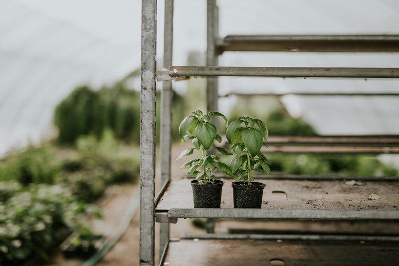 A növények jót tesznek a lelkünknek, örömet okoz a gondozásuk, feltölt, ahogy látjuk fejlődni, nőni őket.
