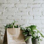 Negyedéves előfizetés, növényekkel