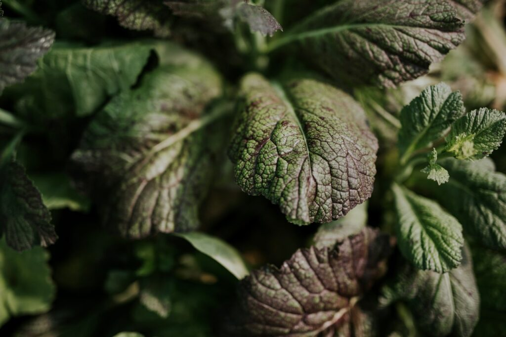 A balkonon termelt zöldségek nemcsak hasznosak, de szépségük - a levelek erezet, színe, formája - ámulatba ejti az embert.