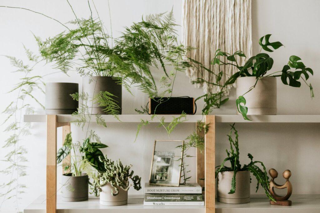 Ha szétültettünk növényeket, el is ajándékozhatjuk növényimádó barátoknak, ismerősöknek, kollégáknak, imádni fogják.