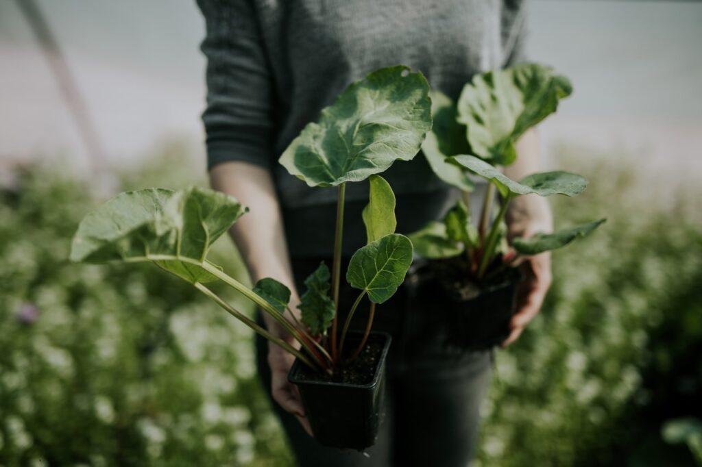 Bőséges zöldségtermésed lehet akár balkonon is. A fenntarthatóság jegyében öntözz esővízzel, és növényeid meghálálják majd!