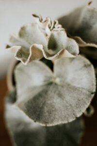 Stílusos ékszerek, design kaspók és különleges szobanövények jól megférnek egymás mellett