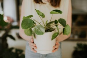 Hasznosak a növényfelismerő vagy növénygondozó applikációk, ha például elbizonytalanodunk a kedvencünk nevével vagy öntözésével kapcsolatban.
